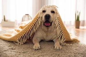 Fido is Living Large: How Homebuyers are Creating Super Dog-Friendly Homes