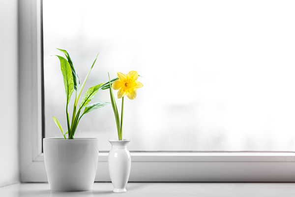 5 Ways to Create Healthy Home Environments